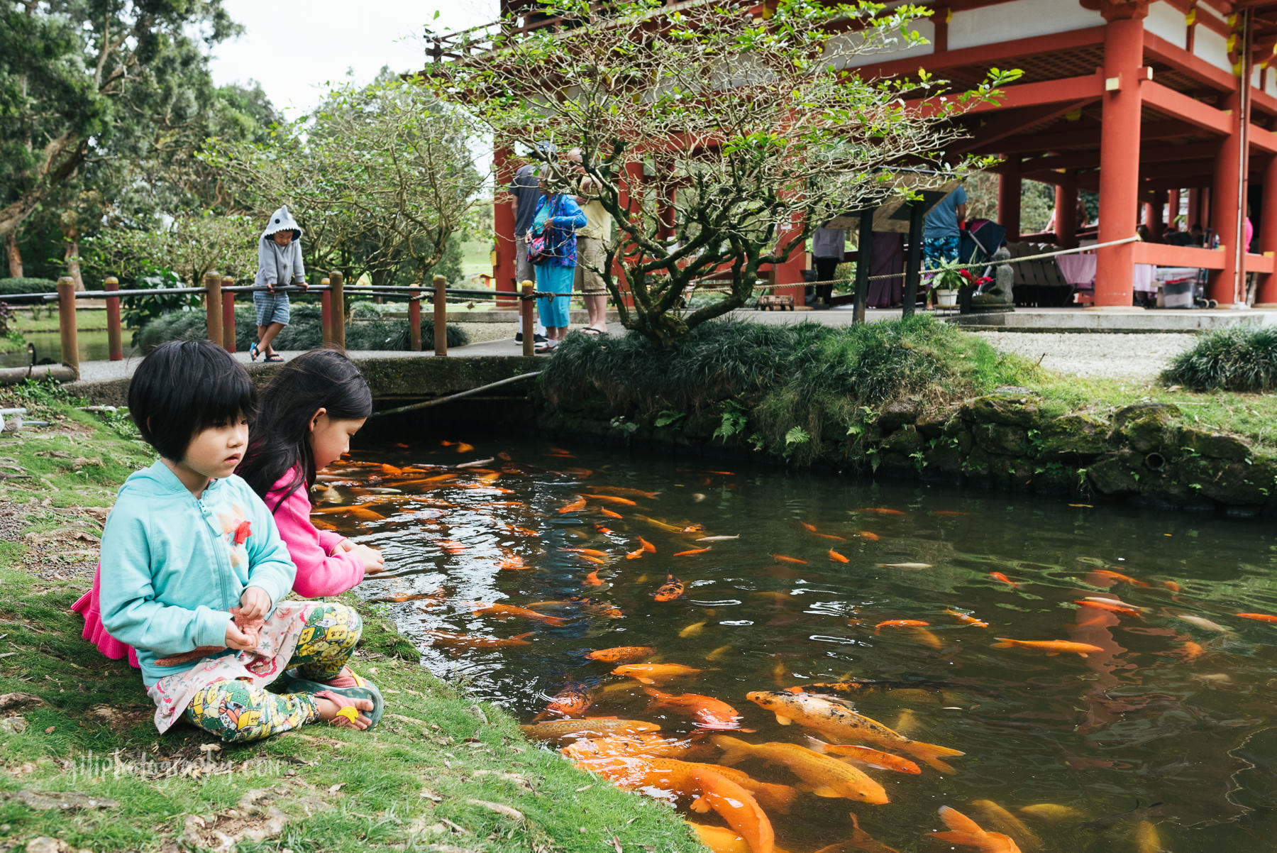 two girls feeding koi at japanese temple