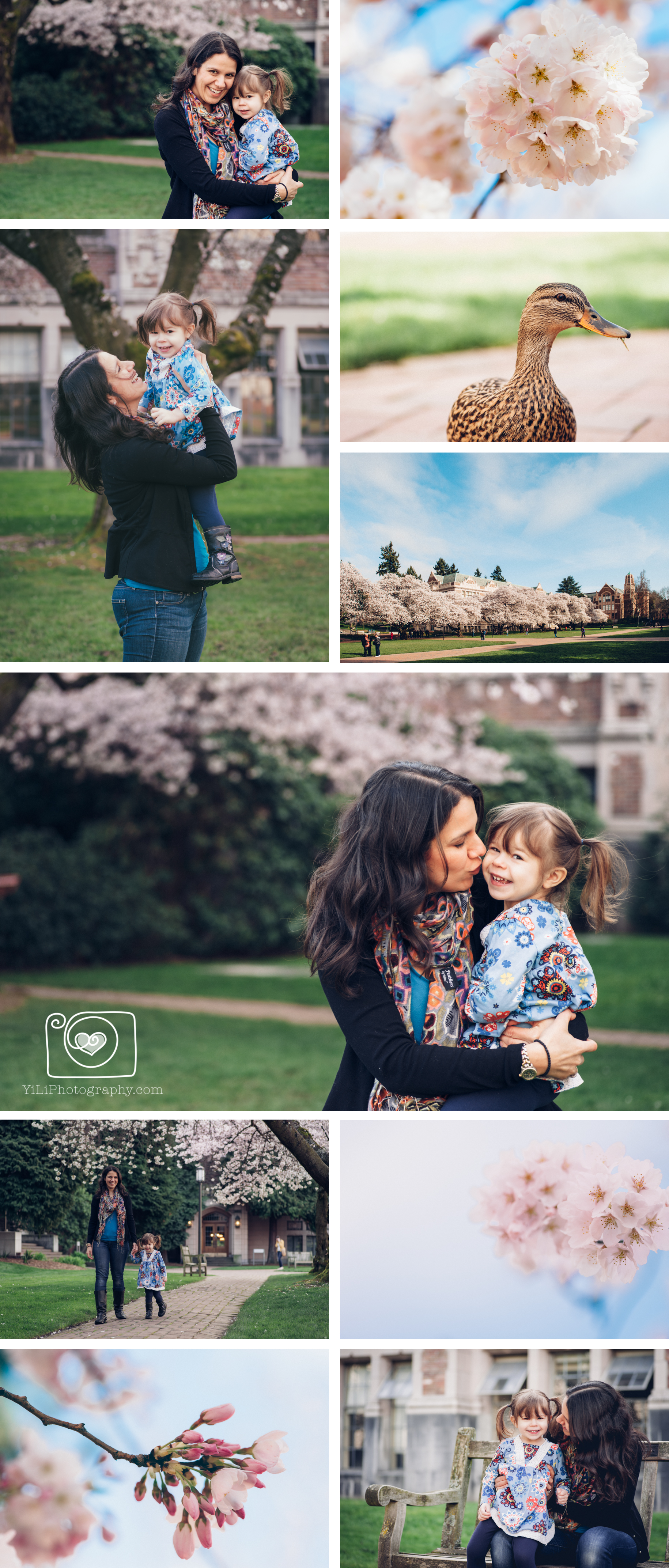 Seattle child photographer cherry blossom session