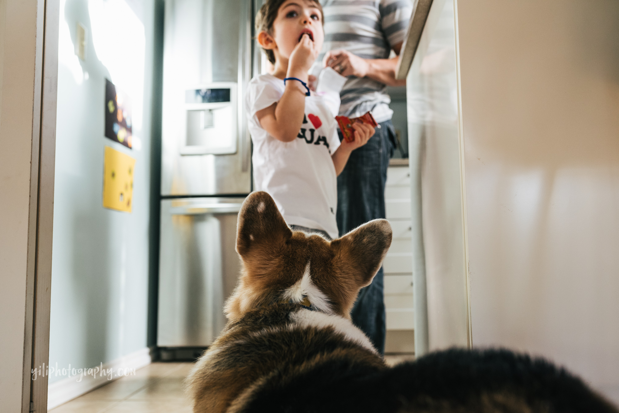 seattle toddler eating a snack while family dog watches
