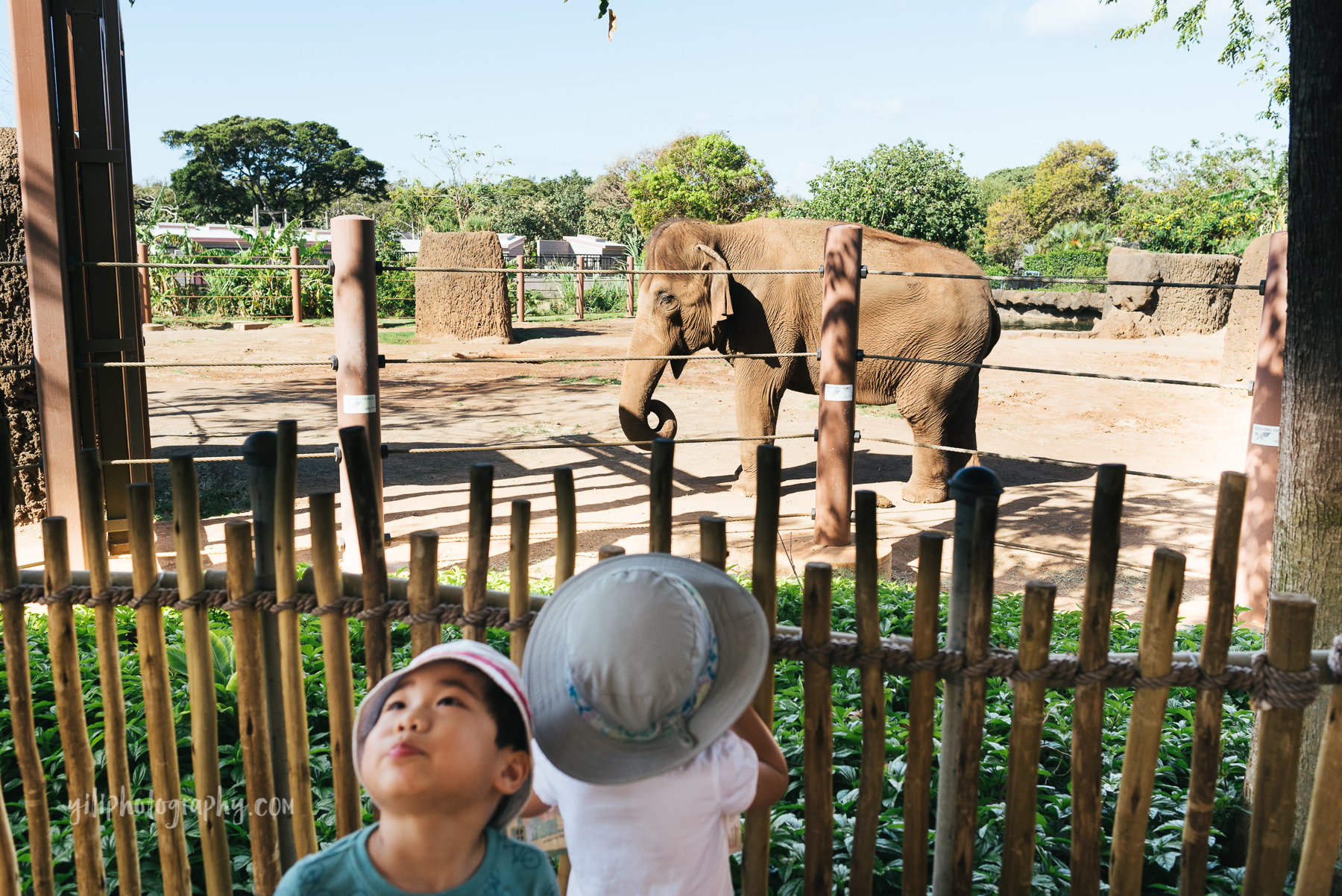 girl watching elephant at zoo