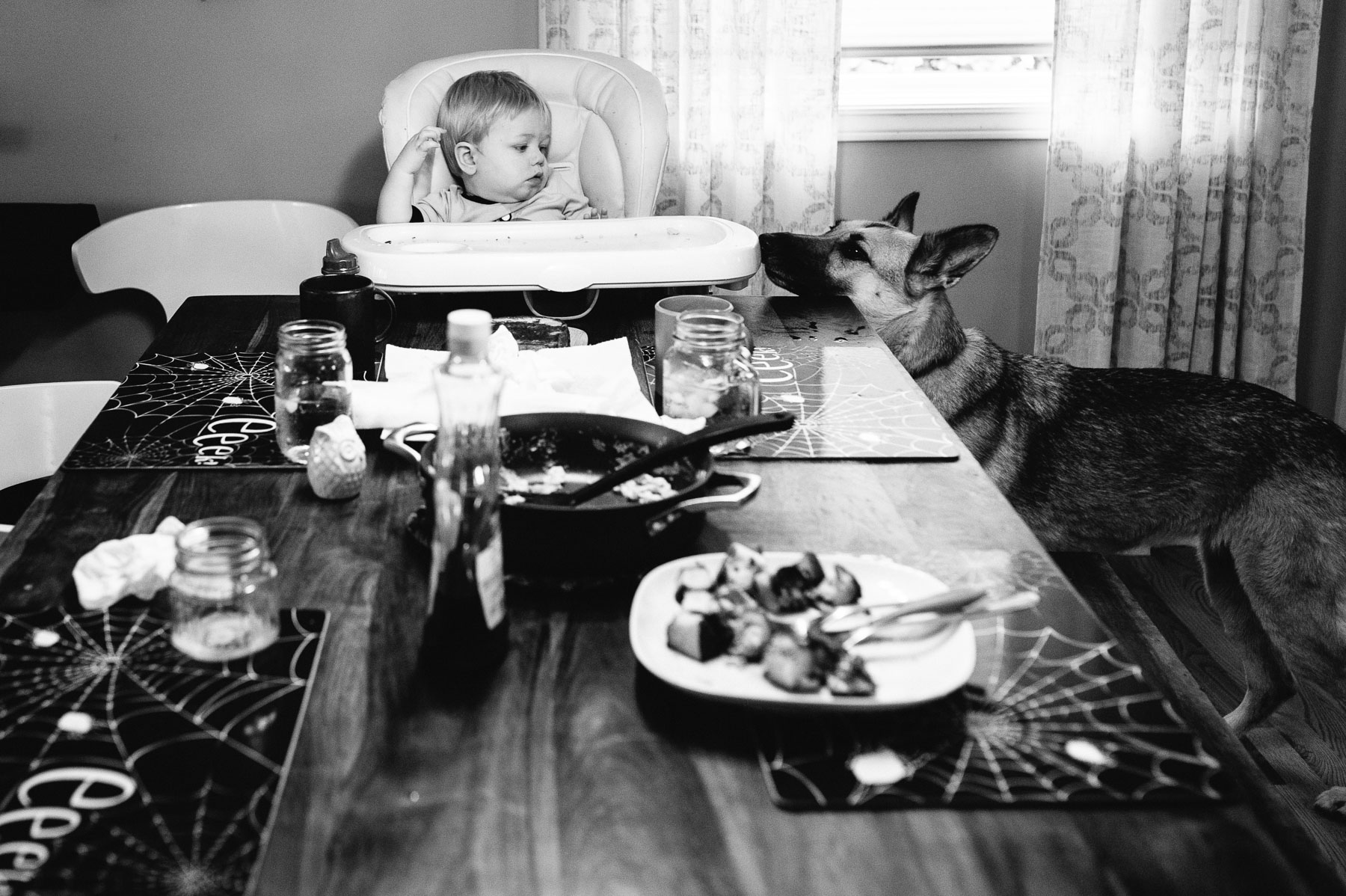 baby boy sitting alone in high chair at dining table with German shepherd dog looking on